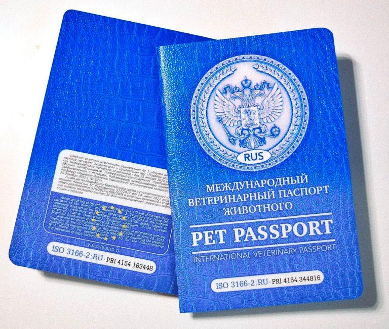 Европейский паспорт вакцинации: подробности о проекте
